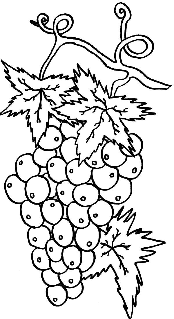 600x1098 Best Grapes For Wine Coloring Pages Color Luna