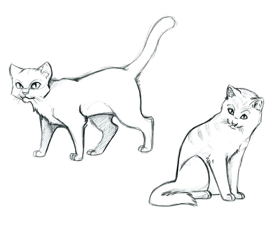 909x761 Warrior Cat Coloring Pages