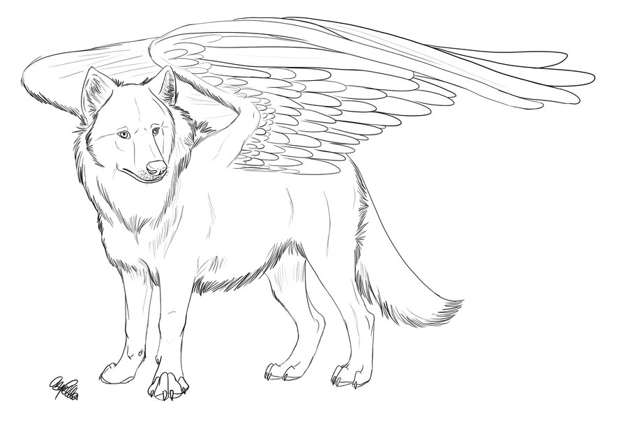 900x618 Drawing Winged Wolves