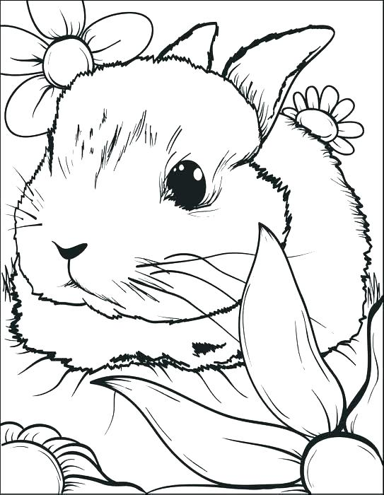 543x700 Coloring Pages Rabbit