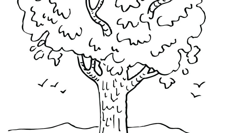 750x425 Coloring Page Tree Winter Tree Coloring Page Coloring Book Palm