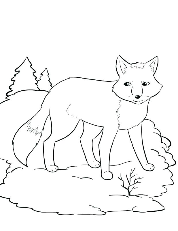 618x800 Winter Tree Coloring Page Hibernation Coloring Pages Winter Tree