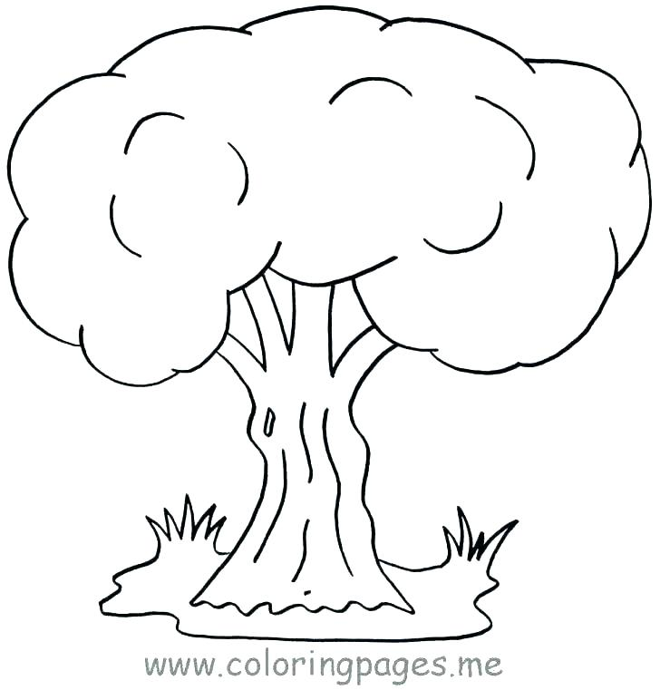 728x761 Bare Tree Coloring Page Bare Tree Coloring Page Good Bare Tree