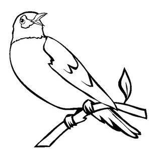 300x300 Wisconsin Robin Coloring Page Kids Play Color For Use