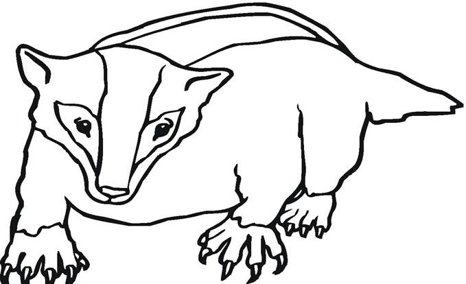 679x414 Badger Coloring Page Spirer Free Printable