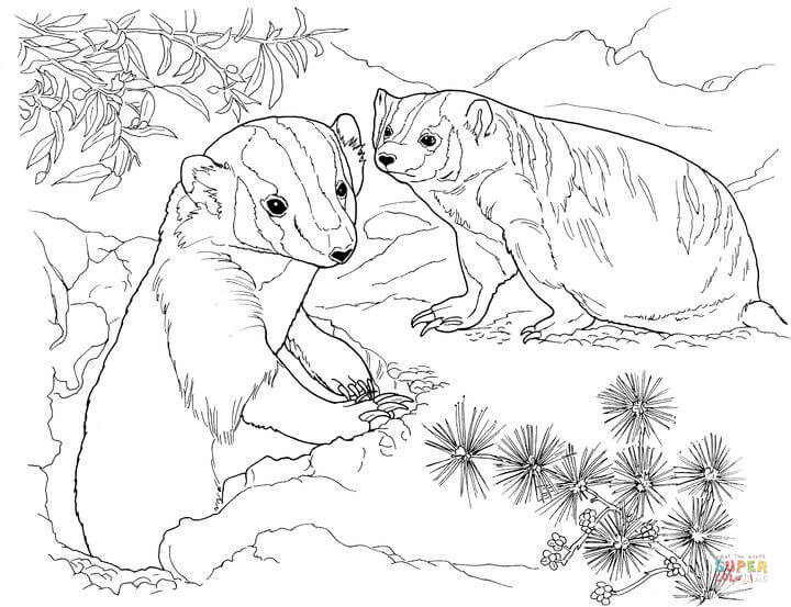 720x553 American Badger Runs Coloring Page From Badgers Category Select