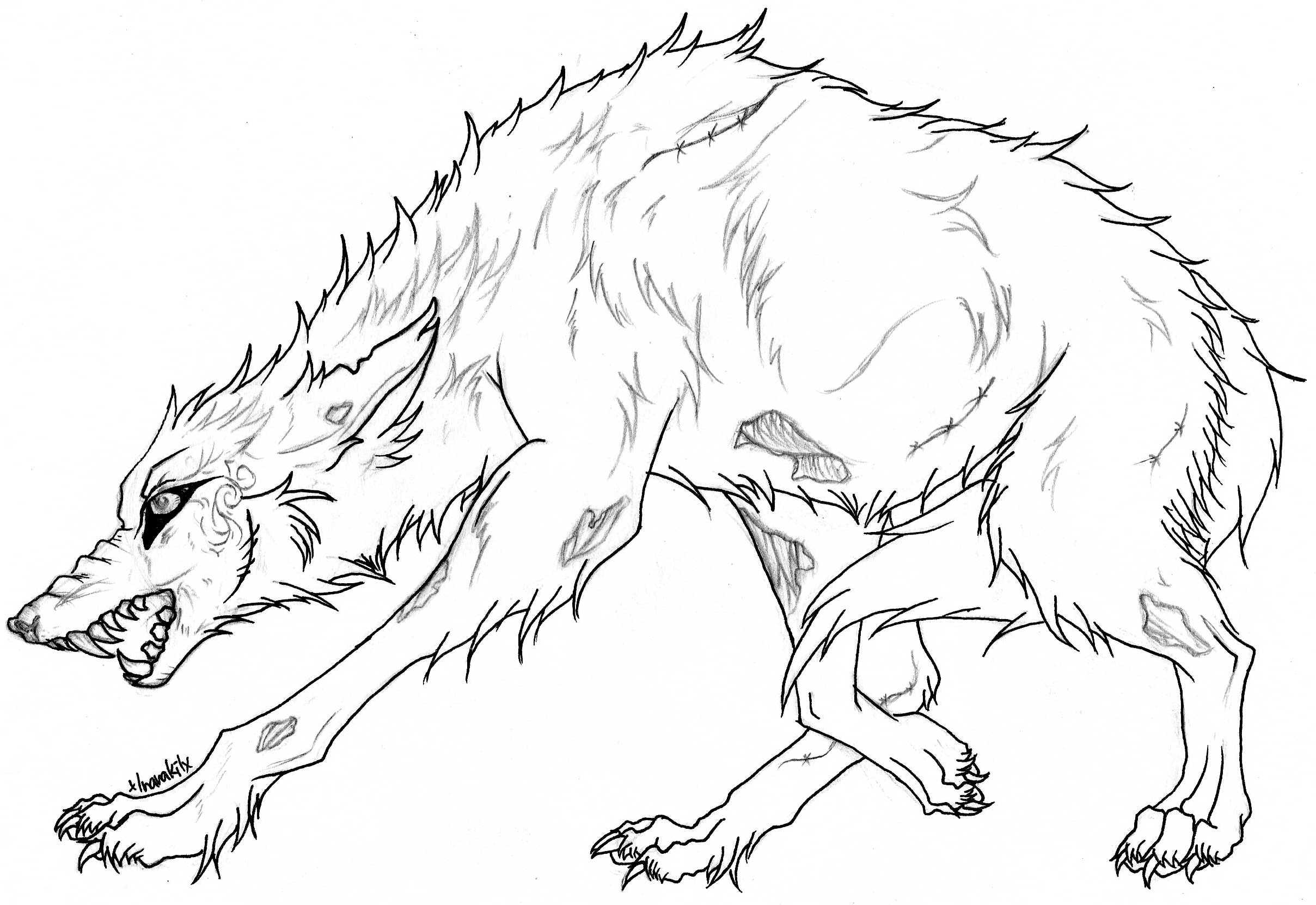 2417x1662 Realistic Wolf Coloring Pages