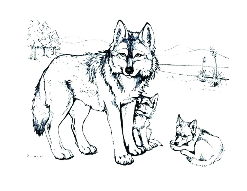 1000x773 Coloring Page Of A Wolf Wonderful Wolf Pup Coloring Pages Wolf