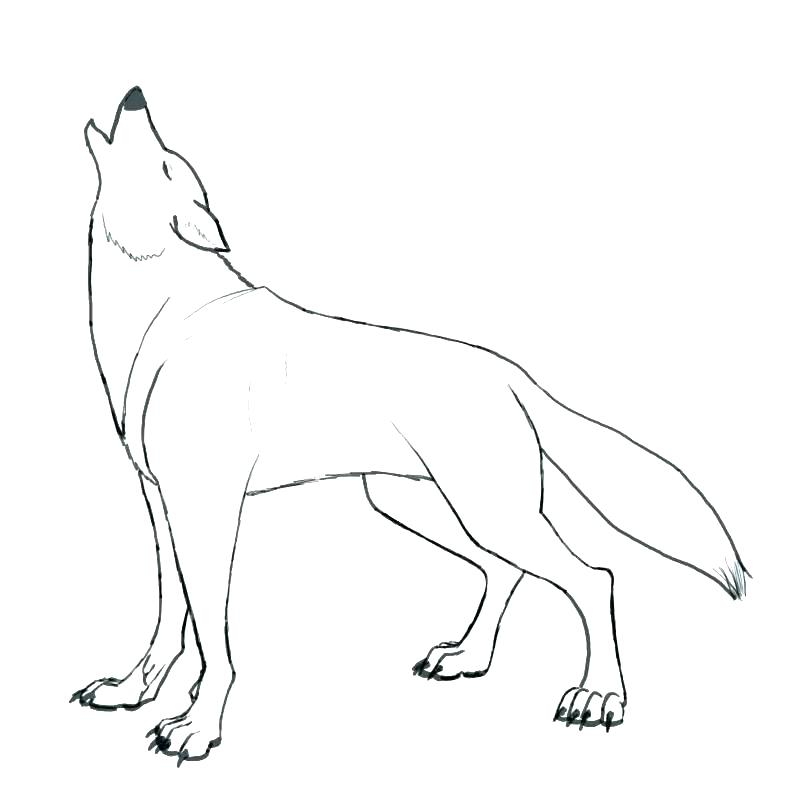 800x800 Free Printable Coloring Sheets Of Wolves Kids Coloring Wolf