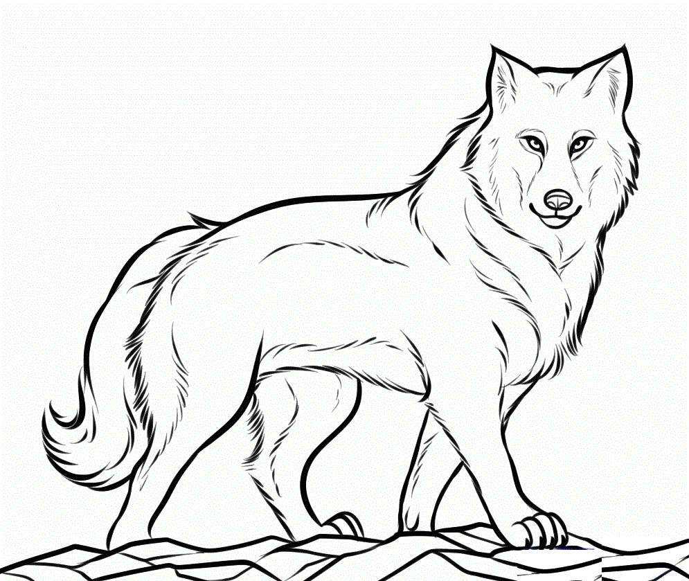 995x839 Free Printable Wolf Coloring Pages Printable