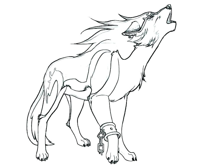 800x667 Wolf Color Pages Great Wolf Lodge Printable Coloring Pages