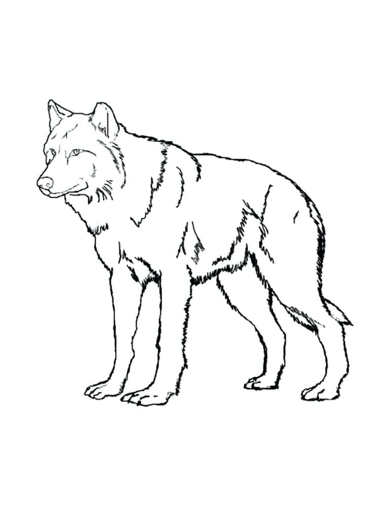 750x1000 Grey Wolf Coloring Sheets Printable Coloring Best Anime Wolves