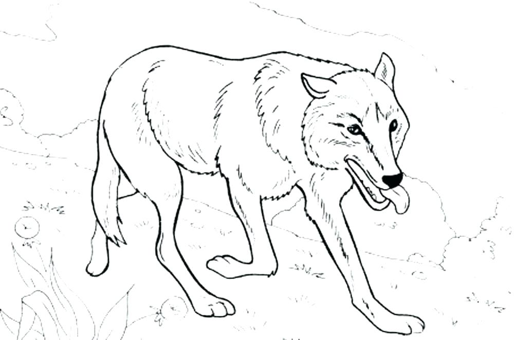 1000x662 Baby Wolf Coloring Pages Baby Wolf Coloring Pages Baby Wolf