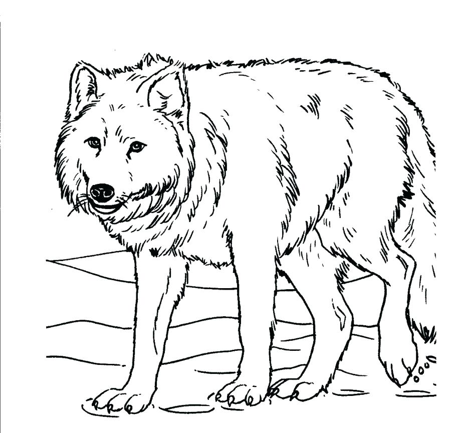 900x864 Printable Wolf Coloring Pages