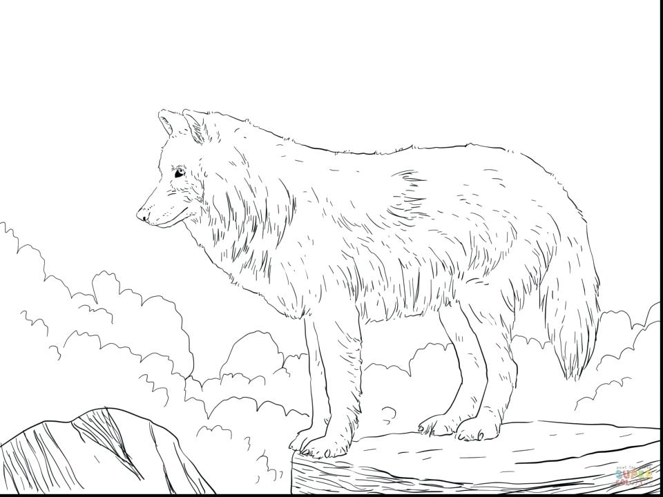 960x720 Free Printable Wolf Coloring Sheets Anime Pages Many Interesting