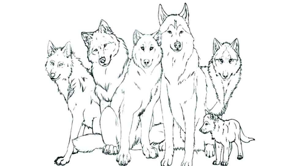 960x544 Free Wolf Coloring Pages Realistic Wolf Coloring Pages Popular