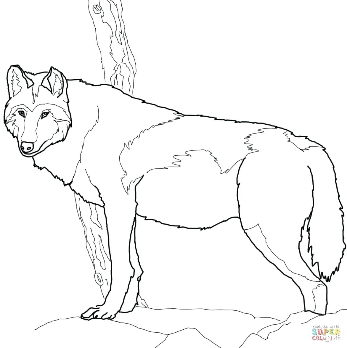 1172x1176 Instructive Gray Wolf Coloring Page Pages Free