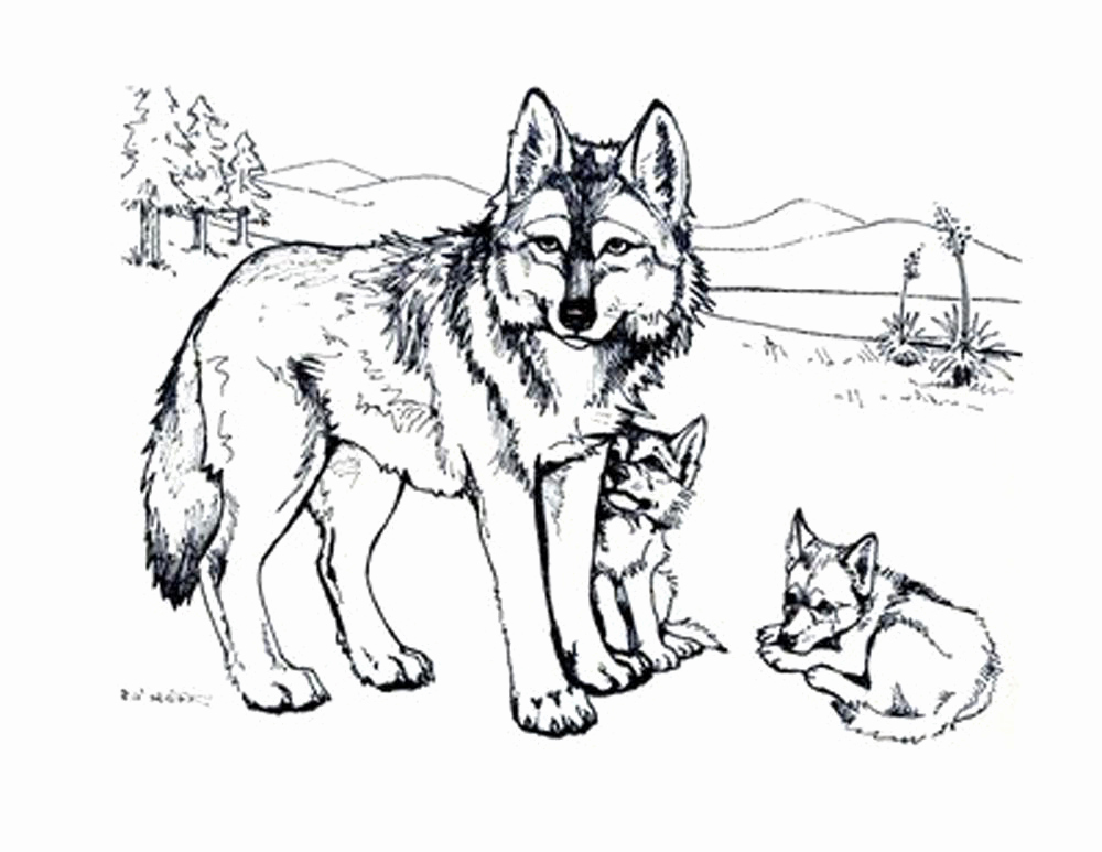 1000x773 Print Download Wolf Coloring Pages Theme Coloring Pages
