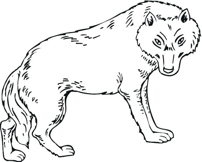 652x525 Wolf Coloring Pages Print Color Craft Arctic Wolf Coloring Pages