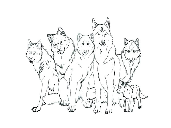 700x525 Wolf Coloring Pages To Print Printable Wolf Coloring Sheets Grey
