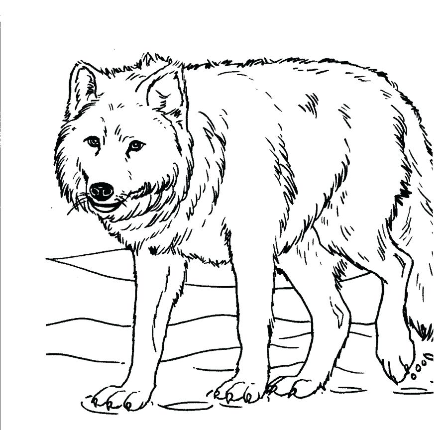 900x864 Realistic Wolf Coloring Pages