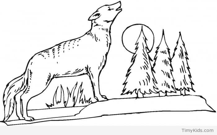 700x437 Wolf Colouring Pages Timykids