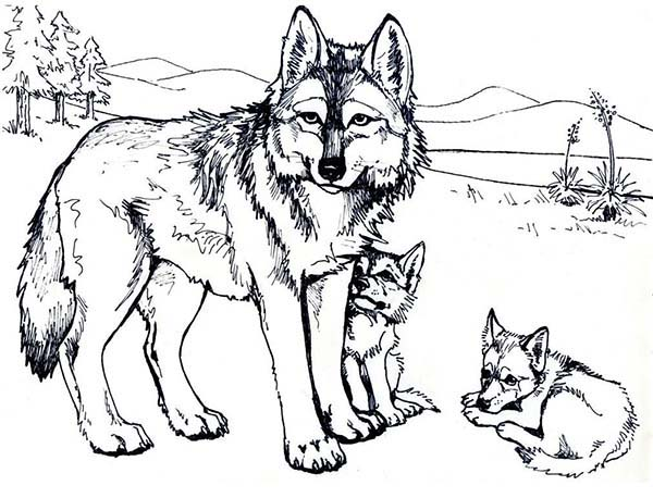 600x458 Wolf Mother And Her Cubs Coloring Page