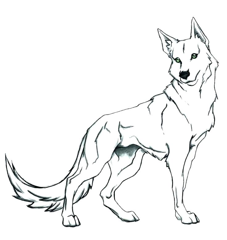 736x779 Coloring Realistic Coloring Pages Wolf Page Cute Face Of Horses