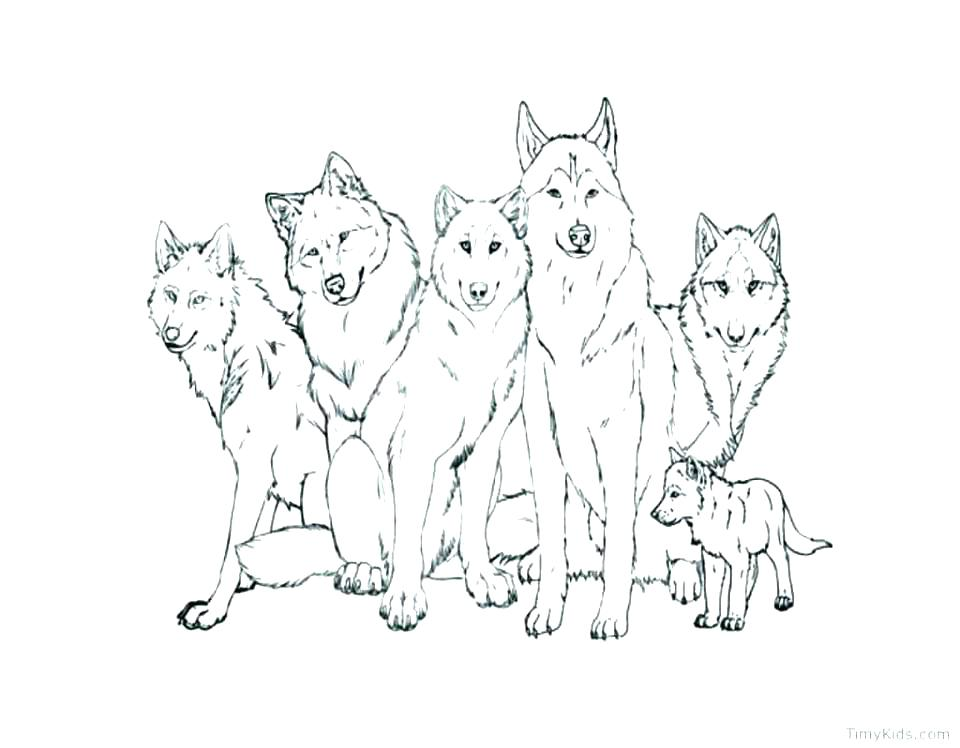 960x748 Free Printable Wolf Coloring Pages
