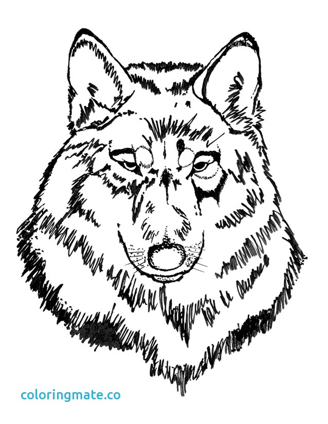 638x825 Wolf Coloring Page Unique Free Coloring Pages Wolf Head