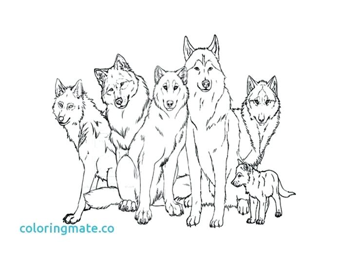 700x525 Wolf Coloring Page Wolf Coloring Pages Free Printable Wolf