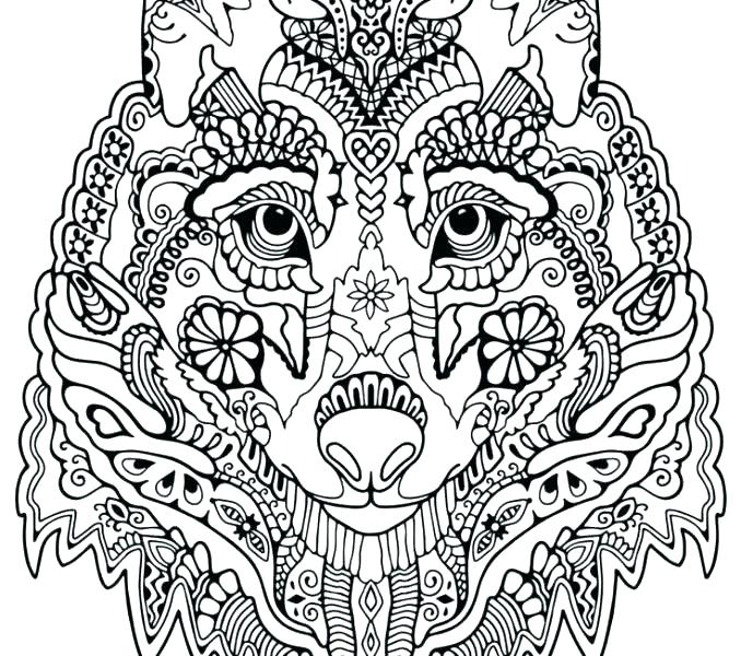 678x600 Wolf Coloring Pictures Grey Wolf Coloring Pages Look Real