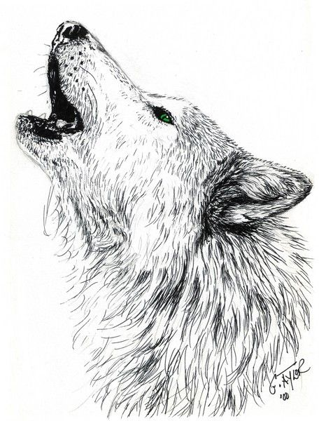 456x600 Wolf Head Howling At The Moon Drawing