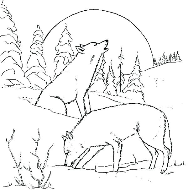 600x605 Howling Wolf Coloring Pages