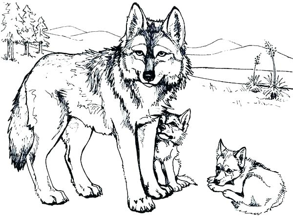600x458 Wolf Pack Coloring Pages Realistic Wolf Pack Coloring Pages Anime