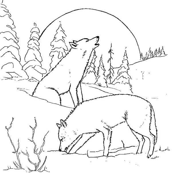 600x605 Wolf Couple