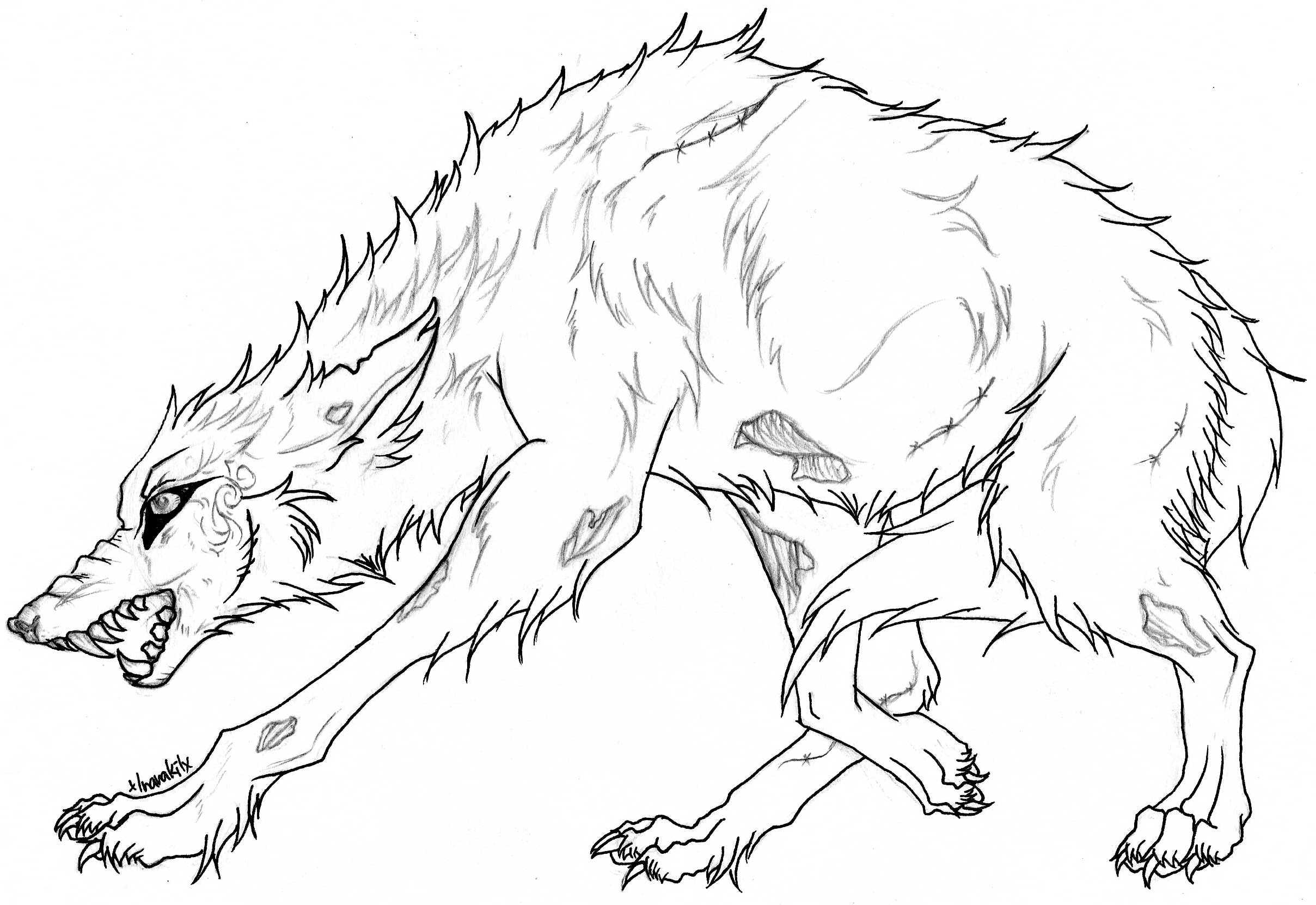 2417x1662 Baby Wolf Coloring Pages Download