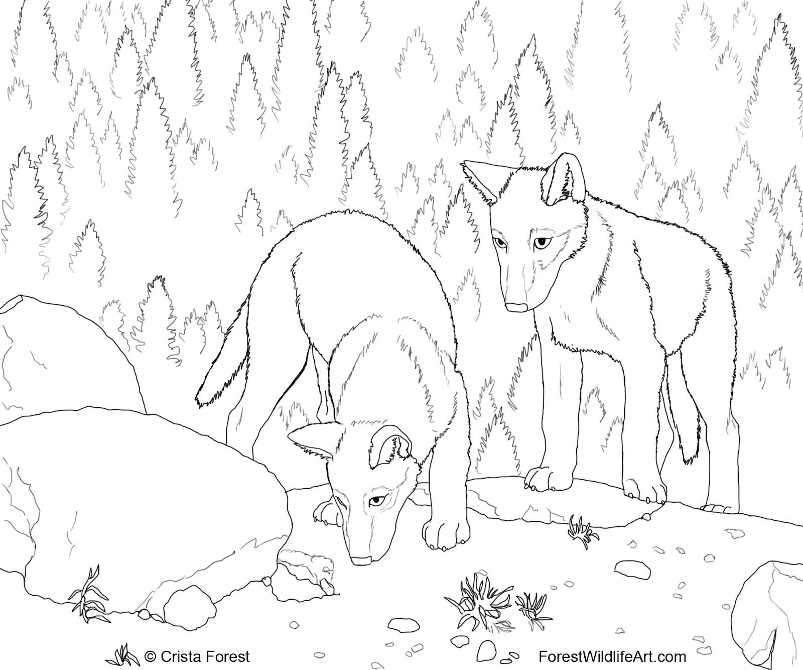 1600x1334 Cute Wolf Coloring Pages Forest Wildlife Art Wolf Pups Coloring