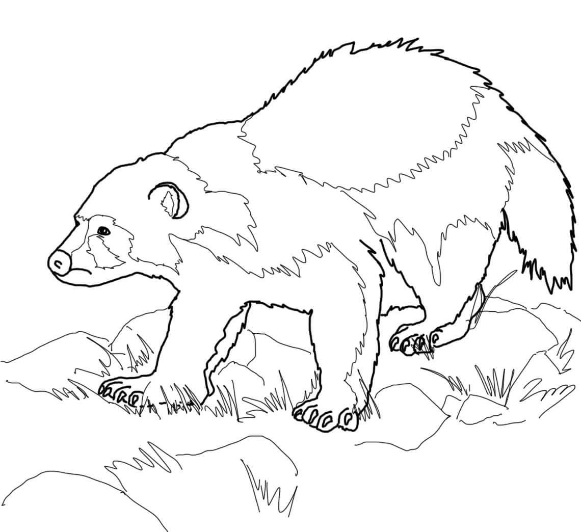 1140x1044 Wolverine Animal Coloring Pages Wolverine Animal Coloring Page