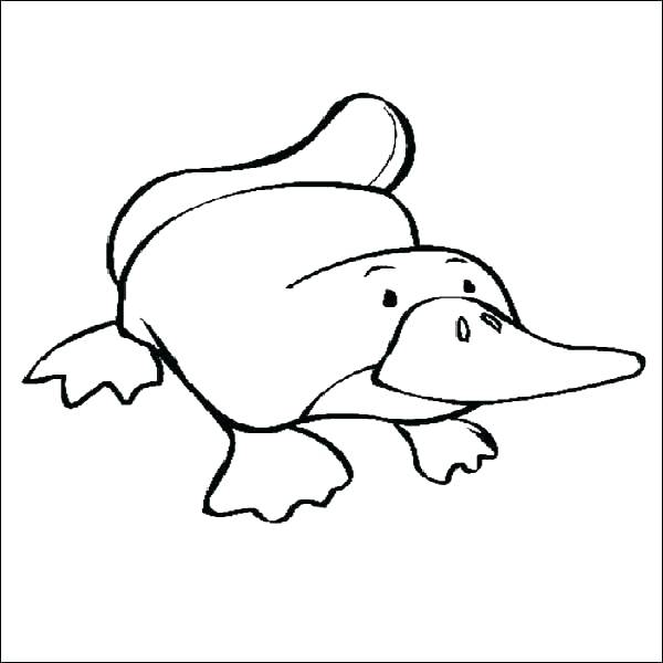 600x600 Platypus Coloring Page Wombat Coloring Page Platypus Coloring Page