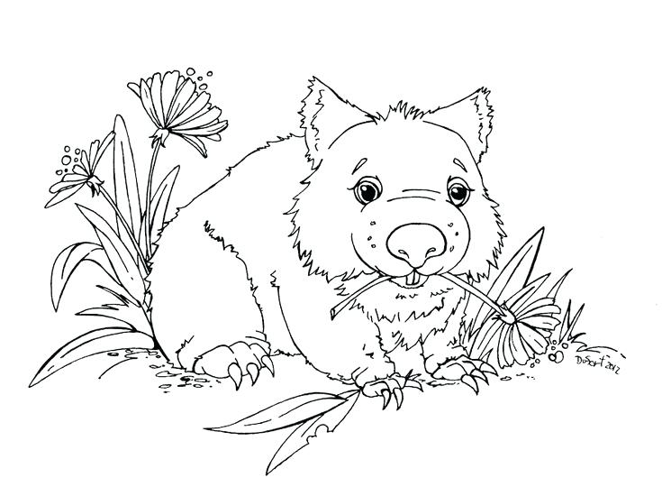 735x550 Wombat Coloring Page Adoptable Wombat