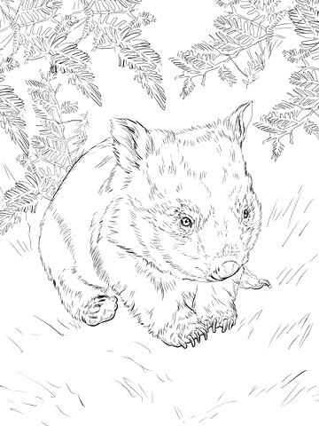 360x480 Wombat Coloring Page Baby Wombat Coloring Page Printable Wombat