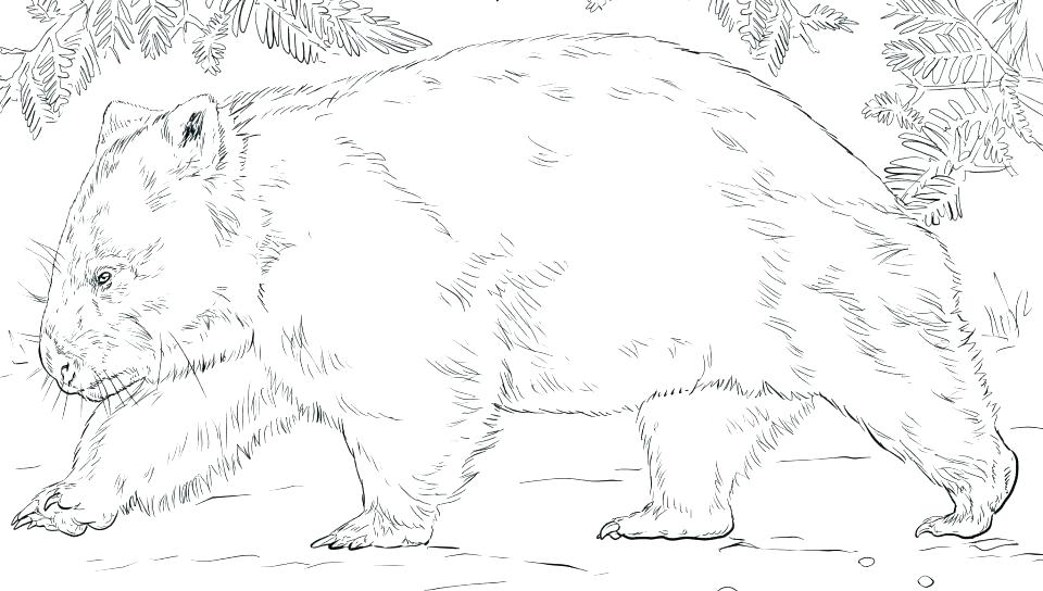 960x544 Wombat Coloring Page Platypus Coloring Page Platypus Coloring Page