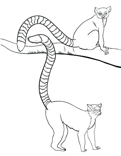 392x507 Wombat Coloring Page Wombat Coloring Page Free Wombat Colouring