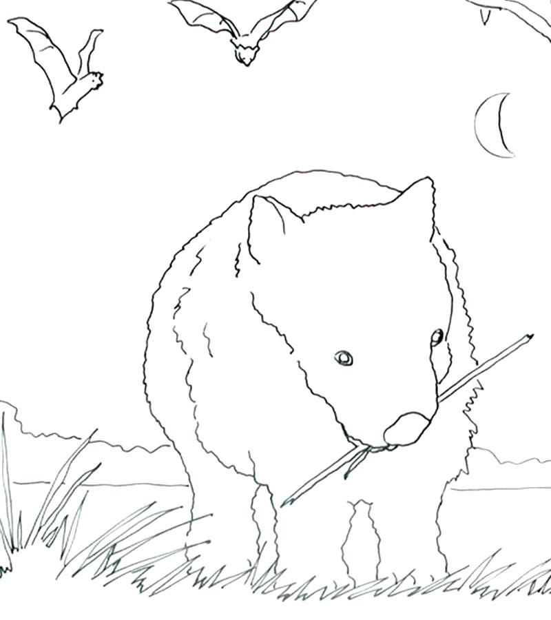 800x900 Wombat Coloring Page Wombat Coloring Page Pin Wombat Drawing Free