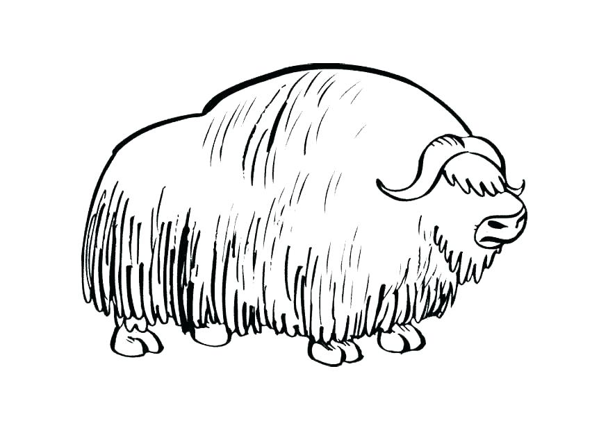 875x620 Wombat Coloring Page Wombat Coloring Page Wombat Coloring Page