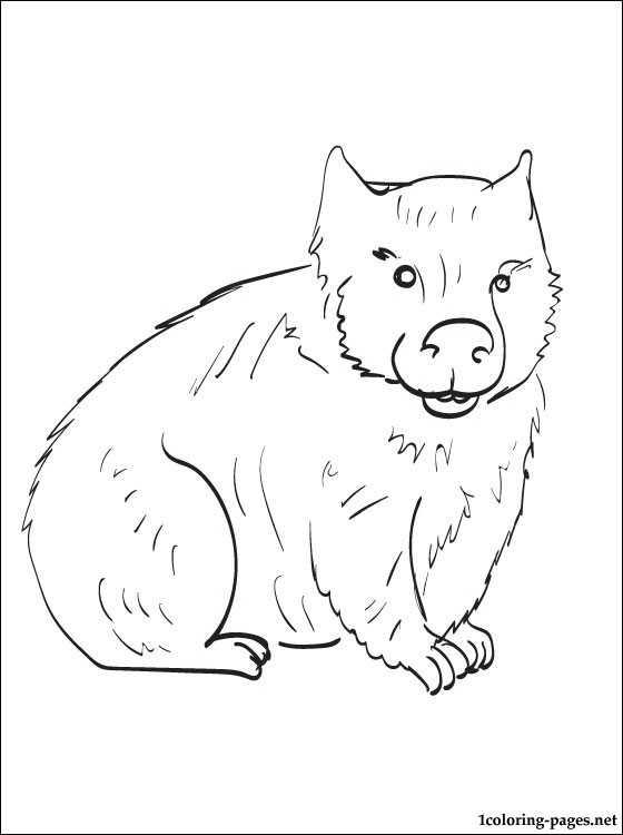 560x750 Wombat Coloring Page To Print Out Coloring Pages