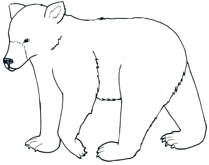 878x697 Free Black Bear Outline Wombat Coloring Page Baby Wombat Coloring