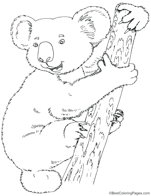 612x792 Koala Coloring Page Wombat Coloring Page Wombat Coloring Page