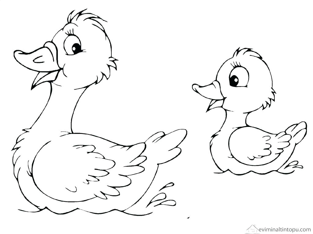 1023x767 Duck Coloring Pages Stunning Duck Ring Pages Print Top Rated Ducks